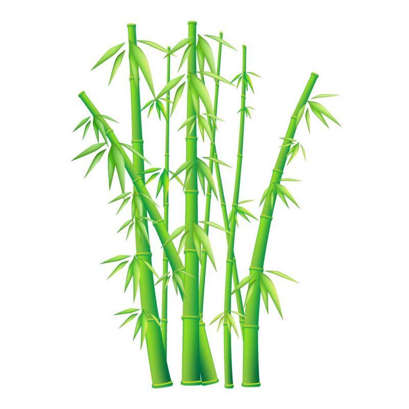 Bambou salary